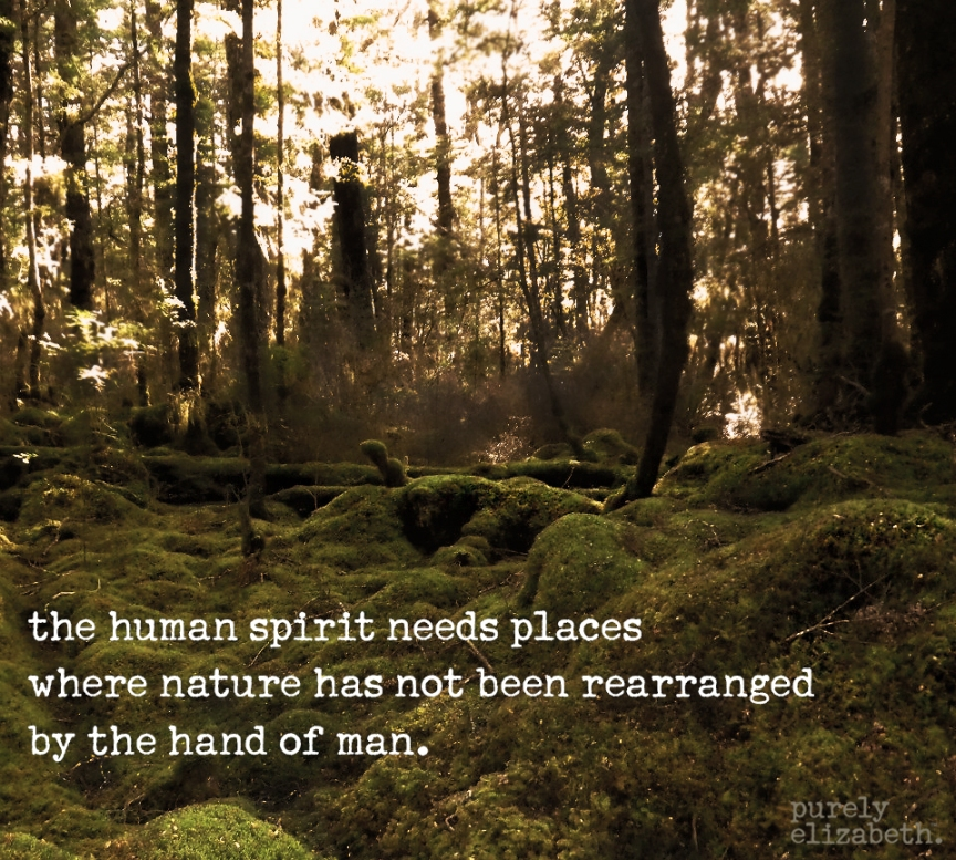 Forest Inspiration Quote