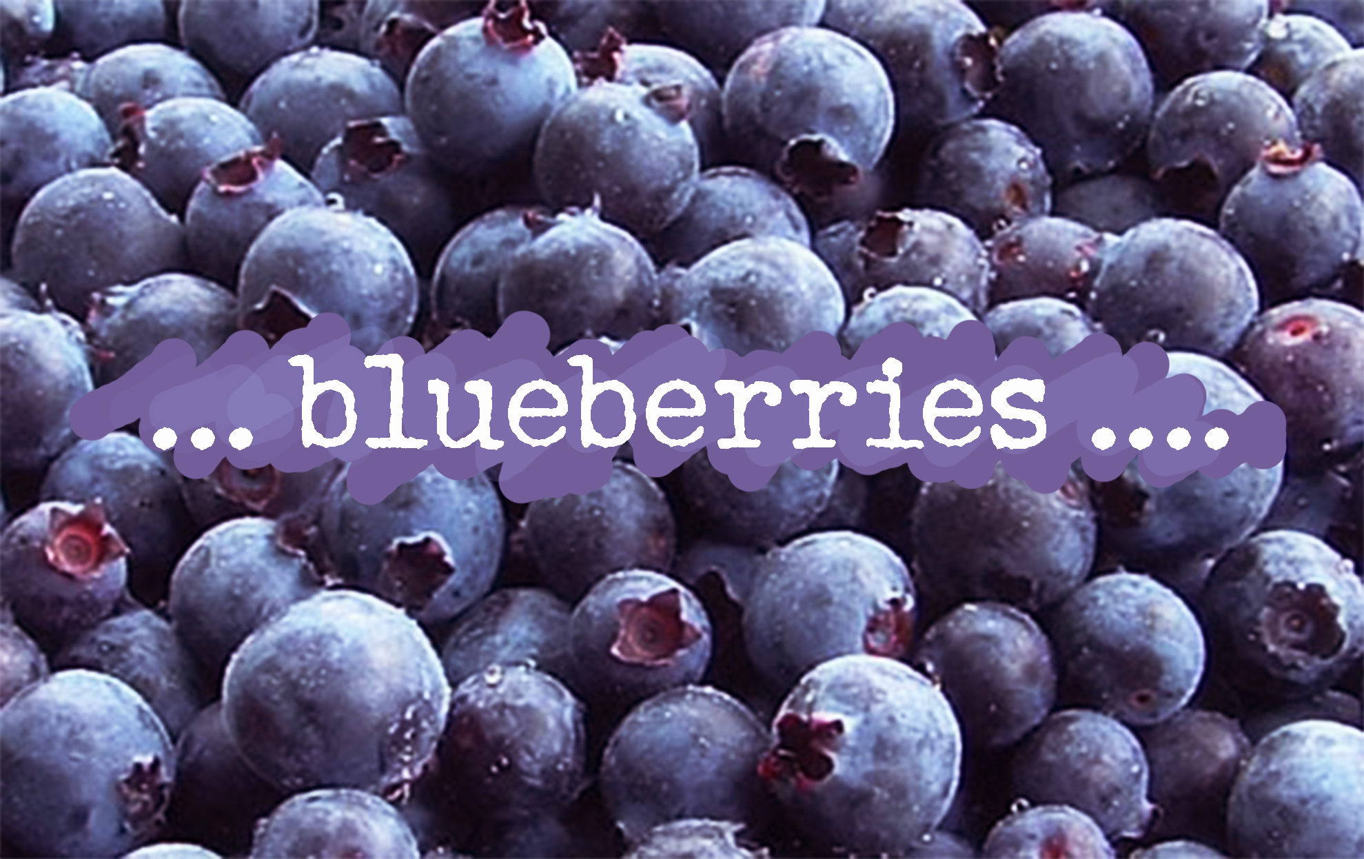 Blueberries Profile Picture