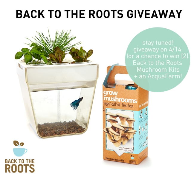 Purely Spring Giveaway Back to the Roots